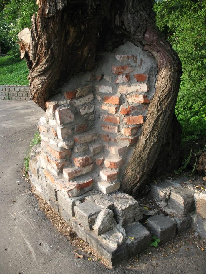 wall inside the tree 1