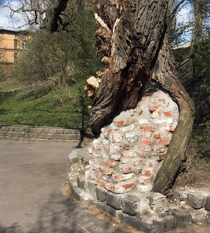 wall inside the tree 4