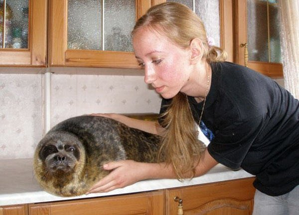 the seal as a pet in Russia 7