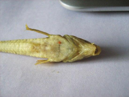 Strange Creature Was Found in the Pack of Shrimps