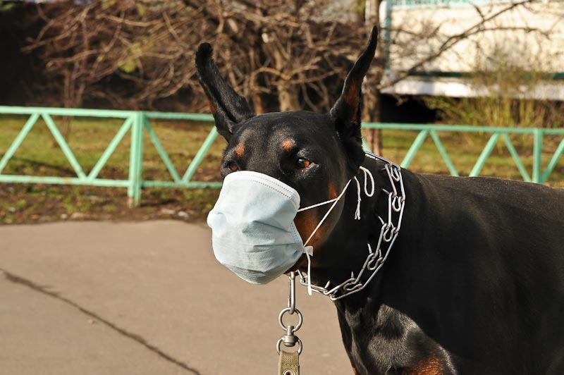 Russian masks craziness in Ukraine - with swine flu