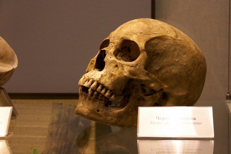 The Darwin Museum 15