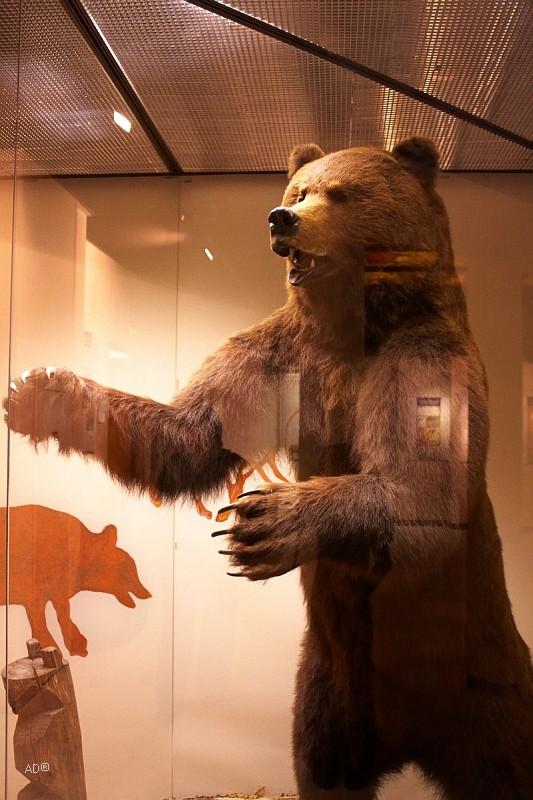 The Darwin Museum 7