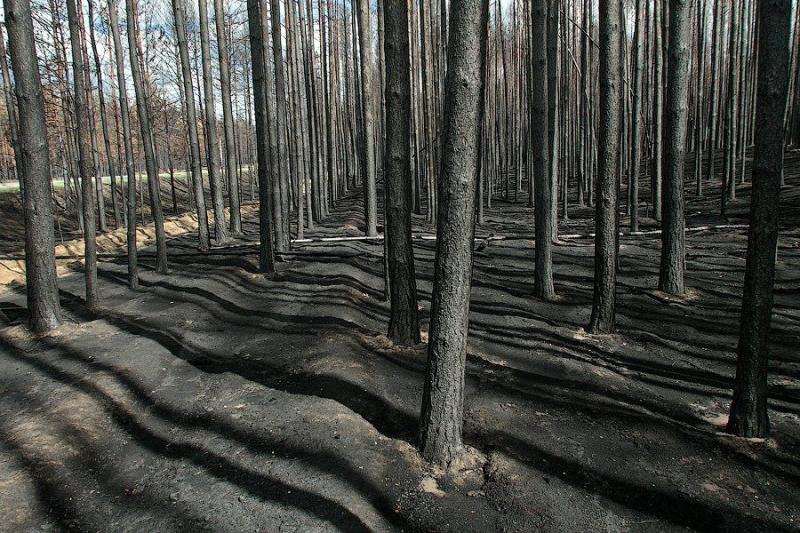 The Dead Forest After The Fire 8