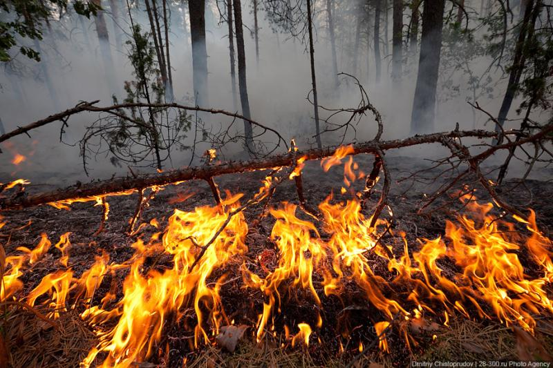 The Moscow Region On Fire 2 11