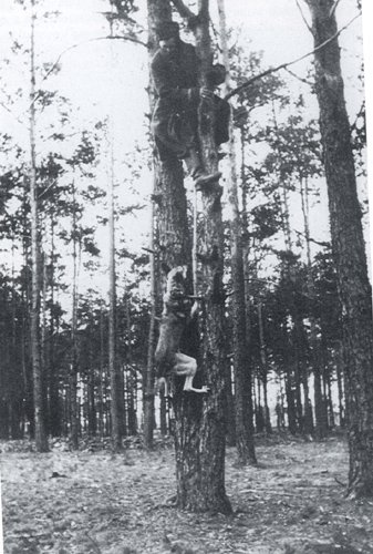 Dogs climb trees in Russia 1