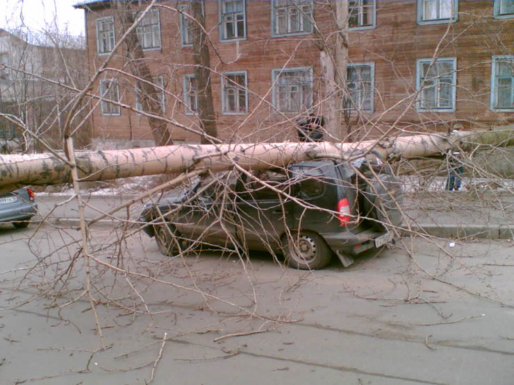 tree falls on a car in Petrozavodsk, Russia 1