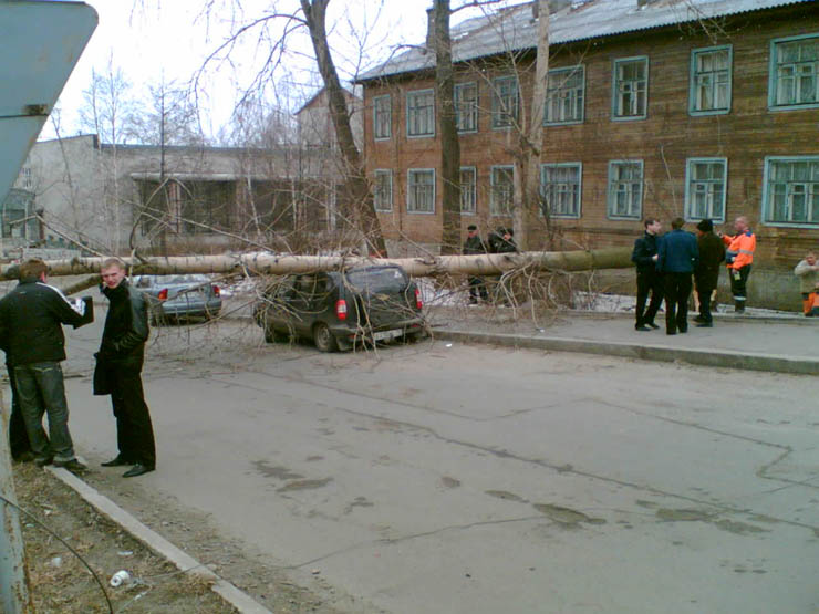 tree falls on a car in Petrozavodsk, Russia 2