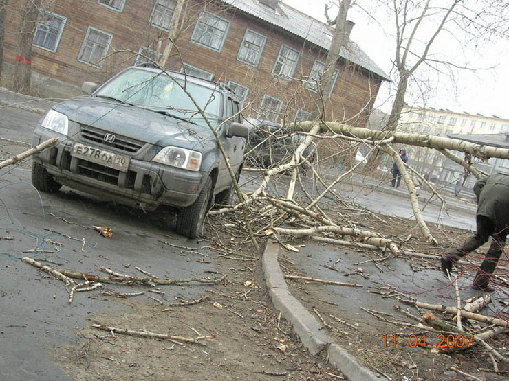 tree falls on a car in Petrozavodsk, Russia 3