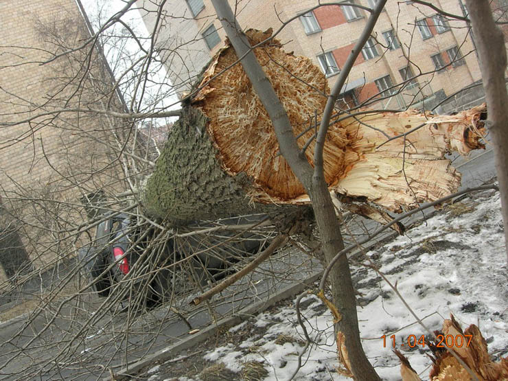 tree falls on a car in Petrozavodsk, Russia 4