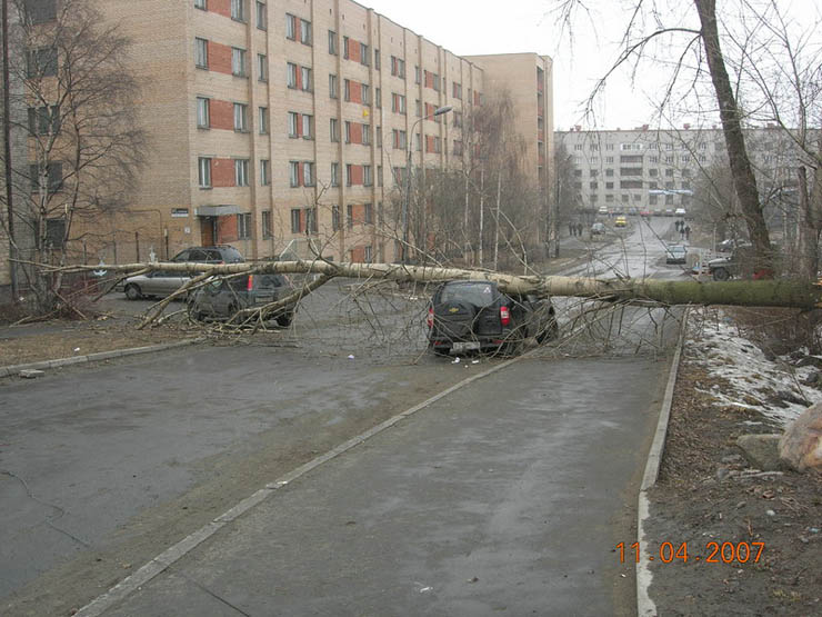 tree falls on a car in Petrozavodsk, Russia 5