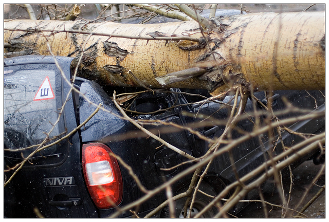 tree falls on a car in Petrozavodsk, Russia 6