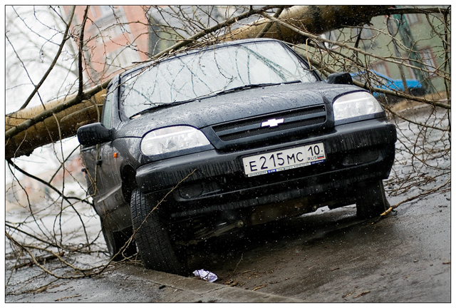 tree falls on a car in Petrozavodsk, Russia 7
