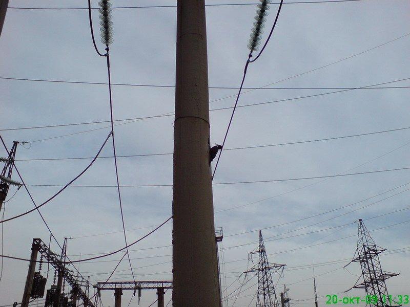 Russian woodpeckers 2
