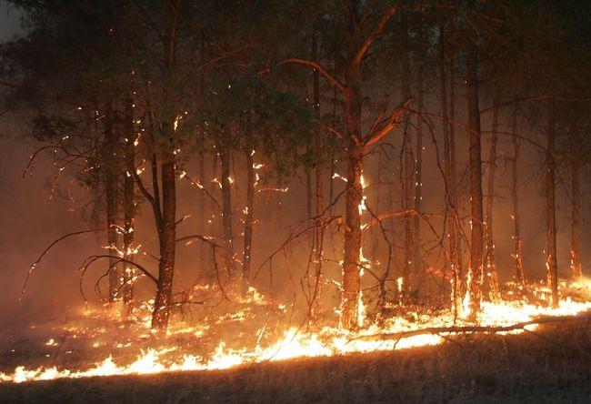 ukrainian president fights fire 11