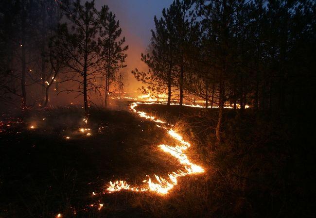 ukrainian president fights fire 12
