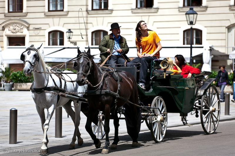 Vienna 11