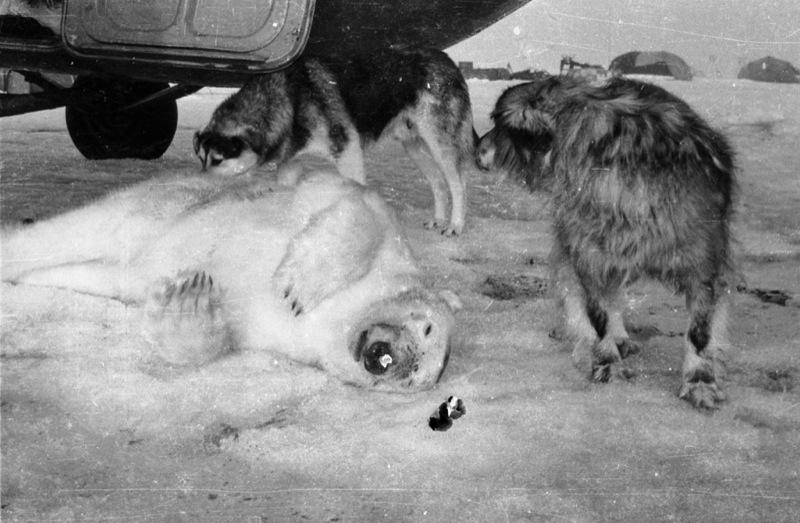 Russian Vintage Polar Photos 31