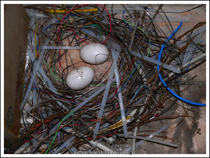 techno nest made from wires with eggs 2