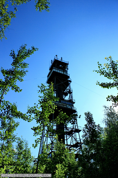 Wonderful Tower In The Forest 39