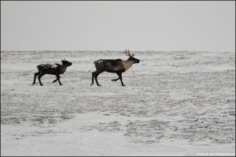 Yamal Peninsula 20