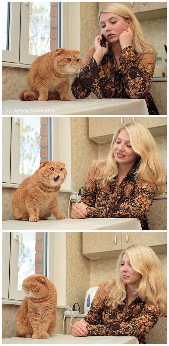 strange russian cat