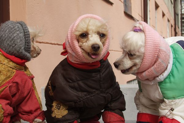 russian dogs cloths