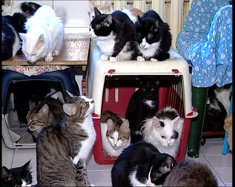 130 cats in a one small Moscow flat