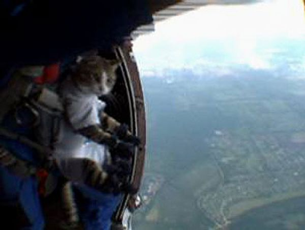 cat jumping with parachute