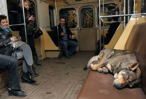 Smartest Dogs: Moscow Stray Dogs