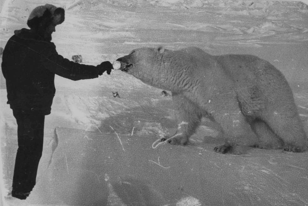 Дружба медведей и людей (11 фотографий)