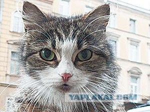 Cats of Blockaded Leningrad