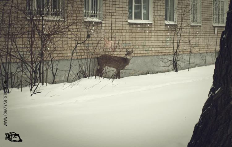 Bambi's Adventures In Yaroslavl