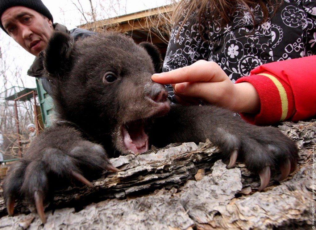Himalayan Bear Cubs Who Lost Their Mom