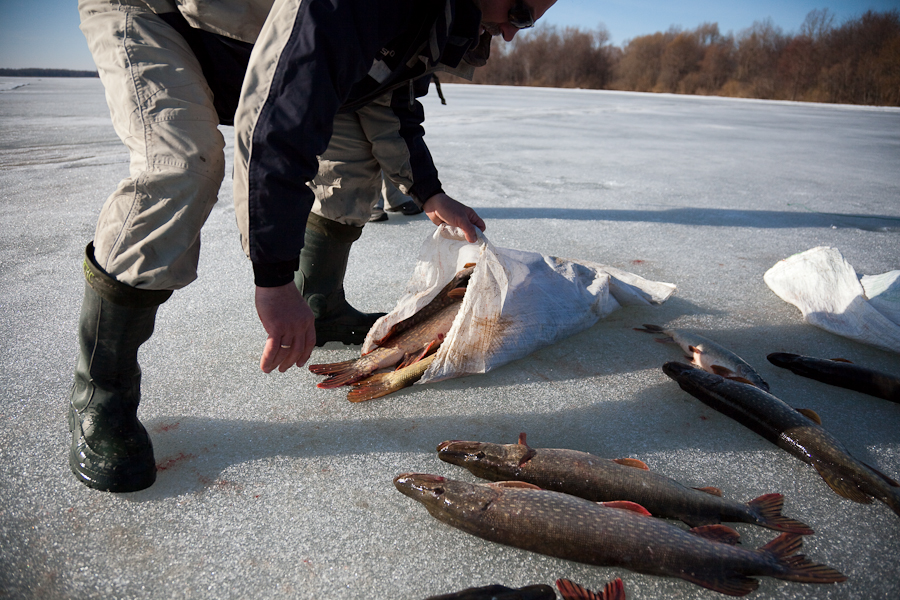 рыбалка на сеть много рыбы видео