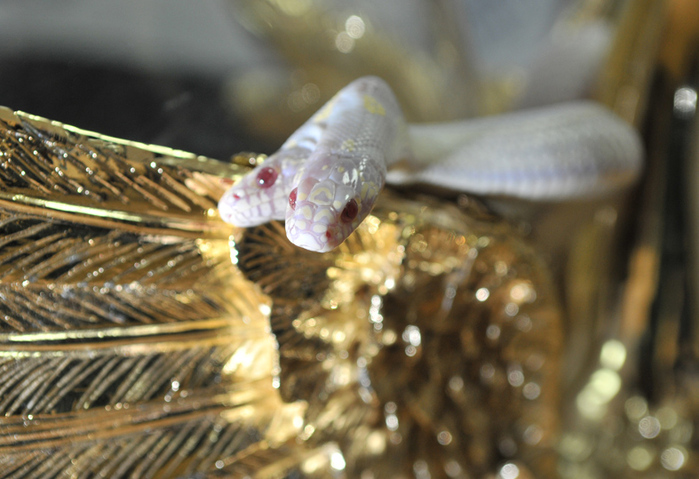 Two-Headed Snake: A Wonder Of Nature In Yalta