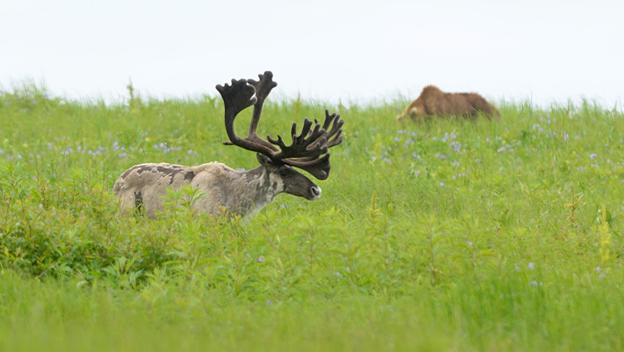 Meanwhile In the Kronotsky Nature Reserve
