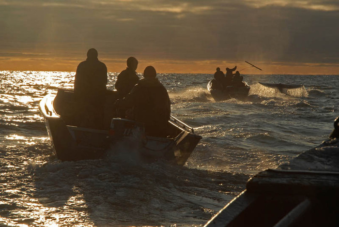 Whaling In Chukotka