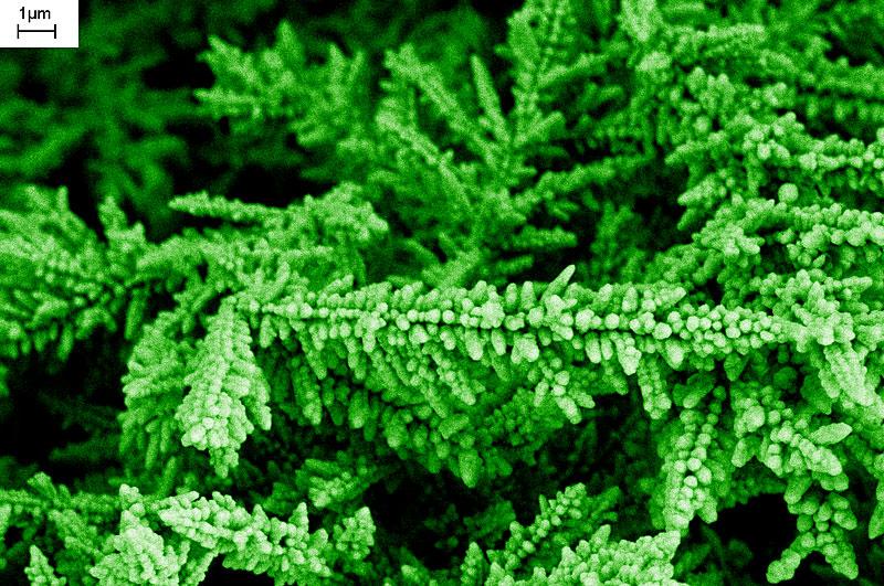 Micro Scale Flora