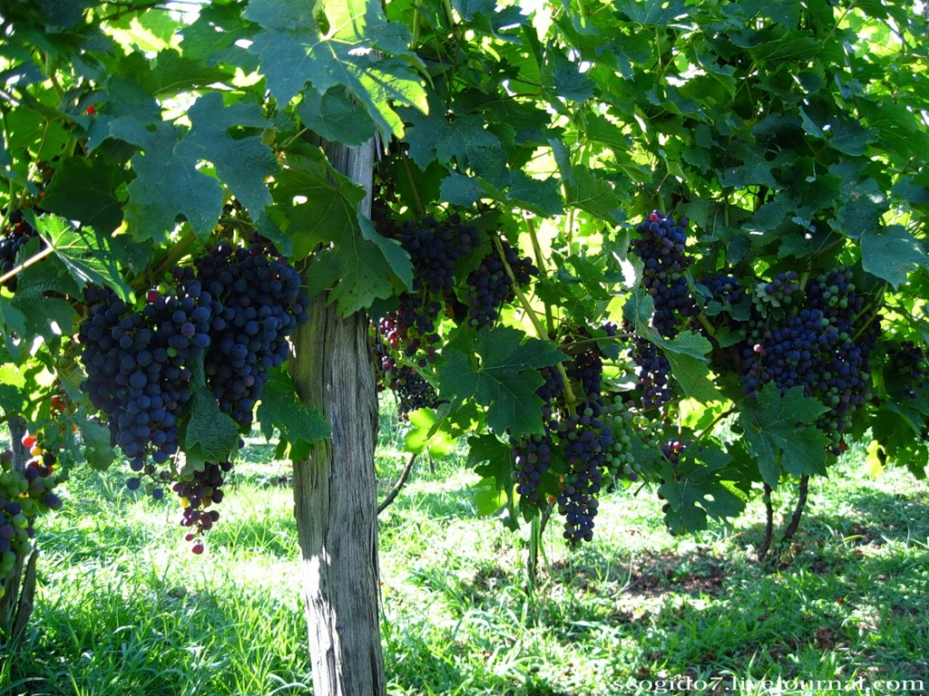 Abkhazia And Its Wines