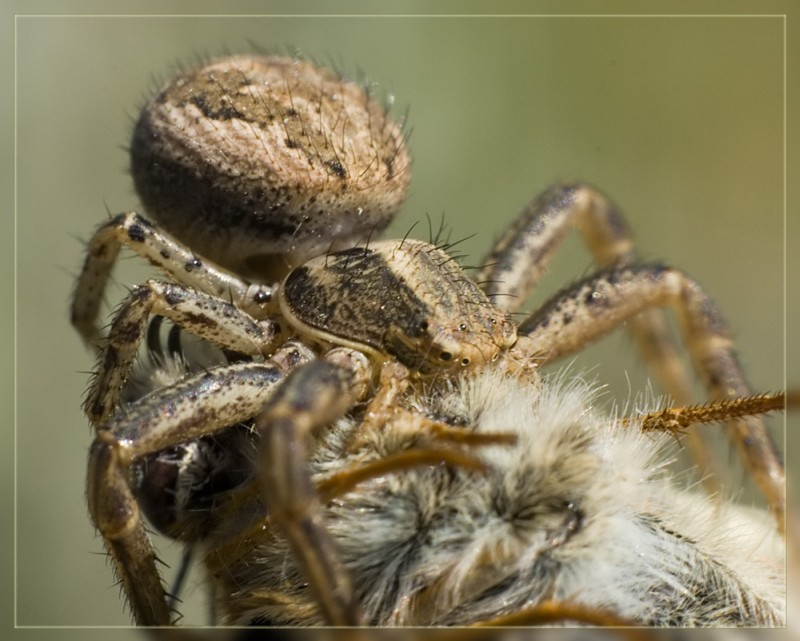 Macro Insect Photography By Dmitry Monastyrsky