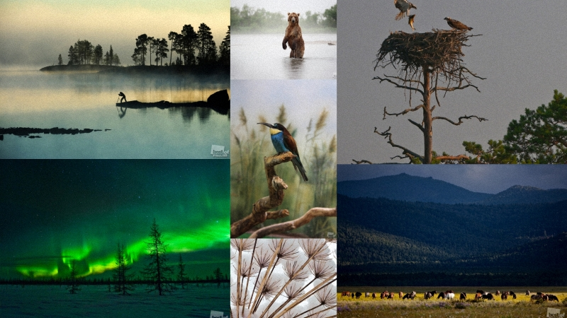 2011 Best Photographs Of Russia. Nomination Nature