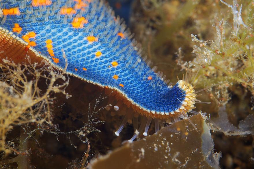 Underwater World Of Alexander Semenov