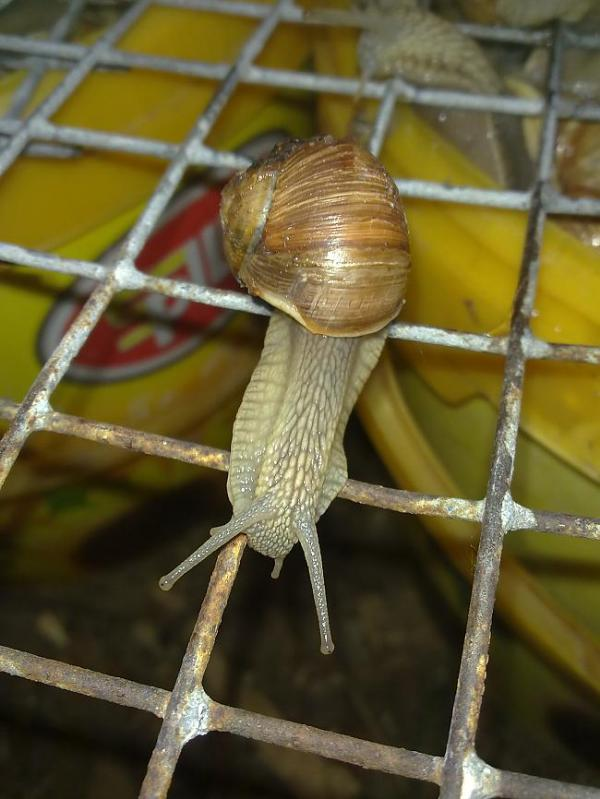 Feed a Snail To Eat It