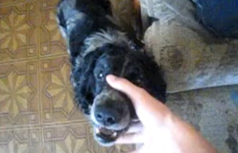 Video: Doggie Dubstep