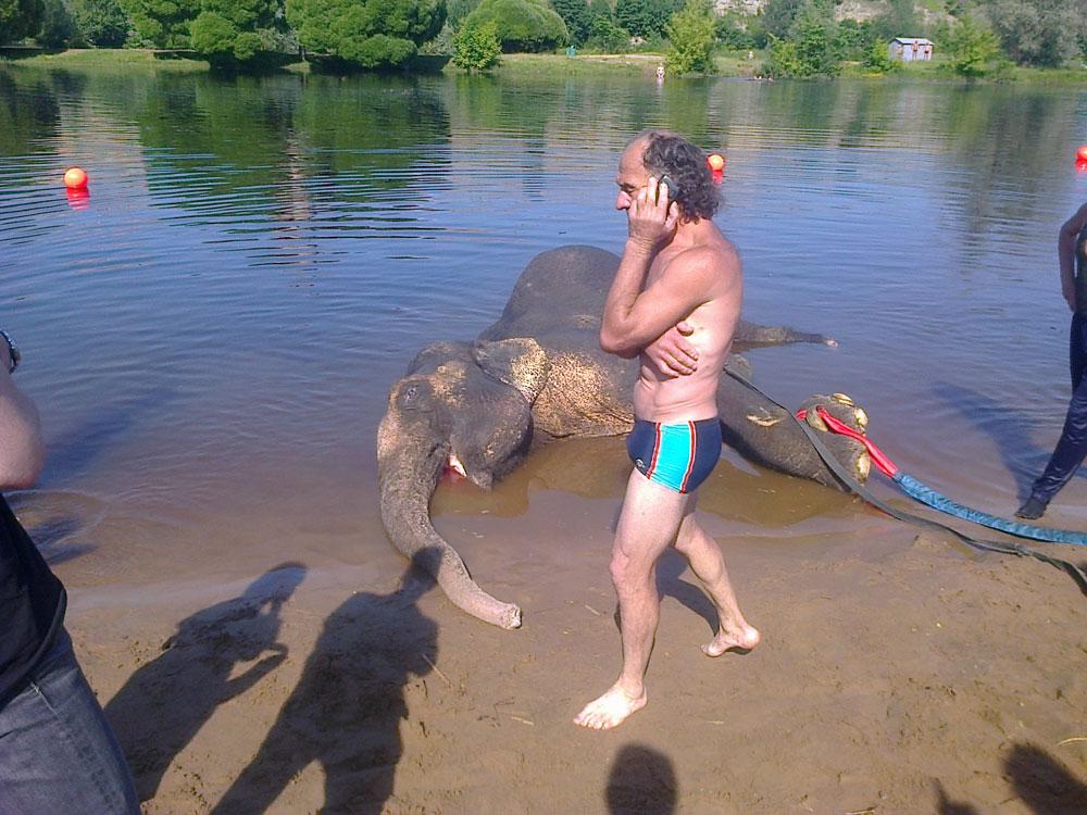 slon-smert-1