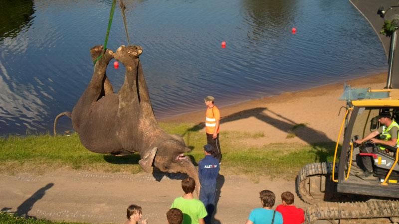 slon-smert-11