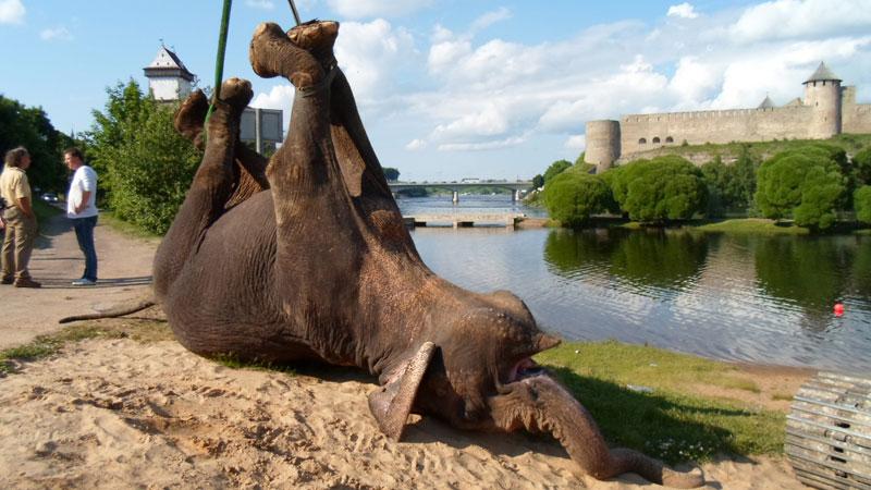 slon-smert-8