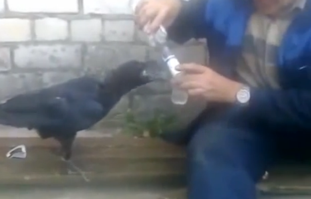 Have Nobody to Drink With? Drink With Any Crow!