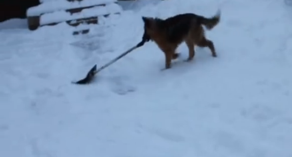 Snow Cleaning Doggie